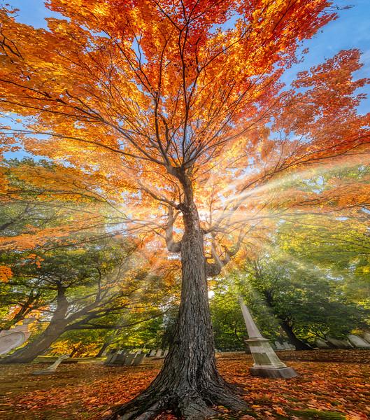 Fire Tree4.jpg