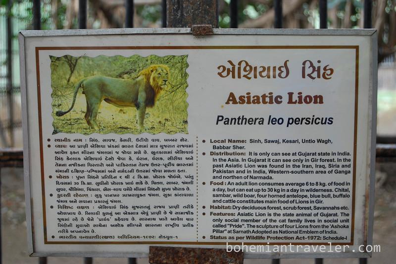 Asiatic lion specs.jpg