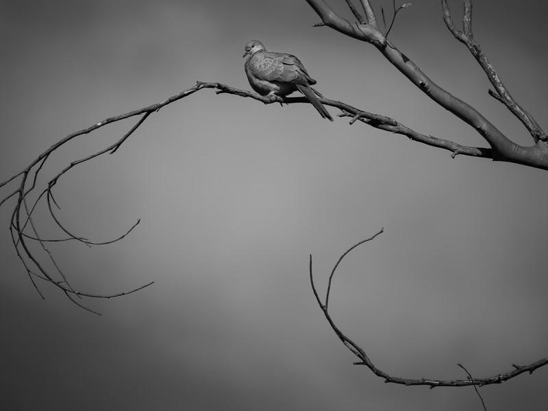 010419   birds  .JPG