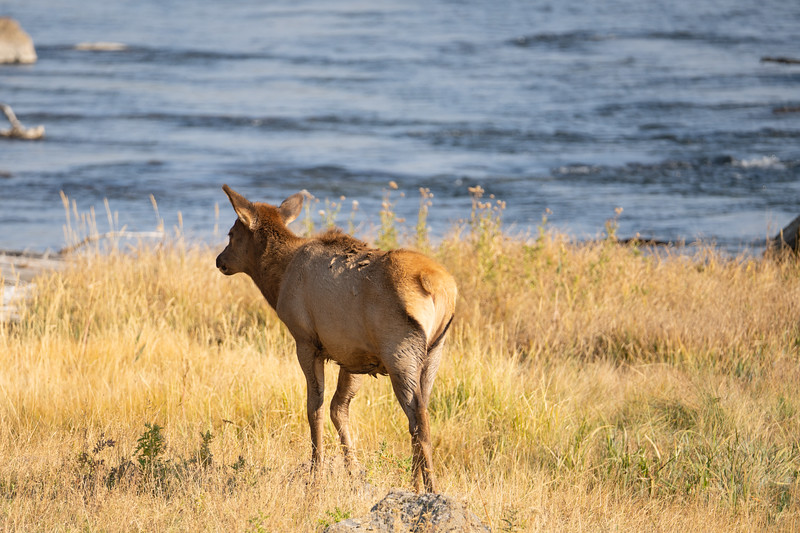 Yellowstone-6.jpg