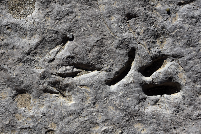 Redgultch-dinosaur-track-clamshellimpression-wyoming.jpg