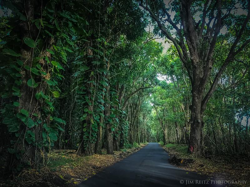 Narrow road south of Hilo