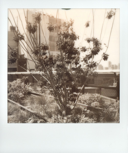nyc-polaroid-01.jpg