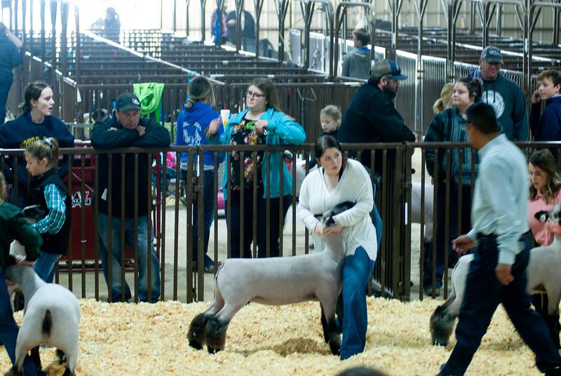 kay_county_showdown_sheep_20191207-74.jpg