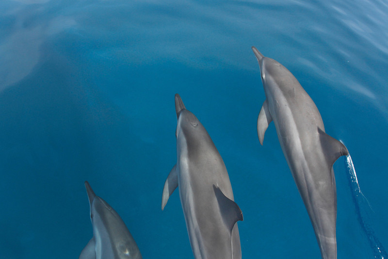 DOLPHINS X 3