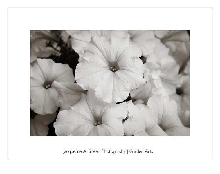 Garden Arts - Click to enter