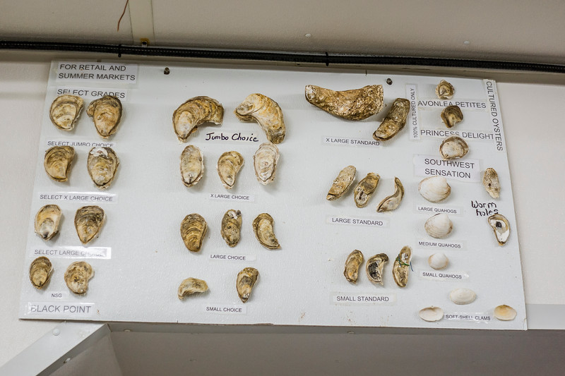 pei  types of pysters.jpg