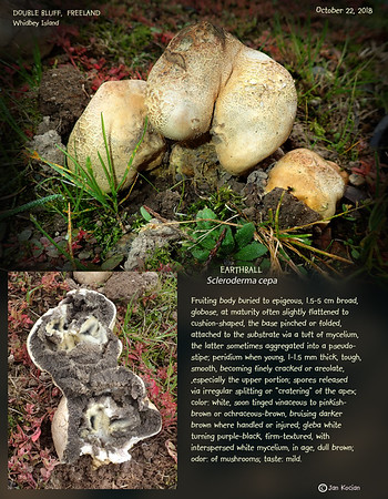 Mushrooms, Slime mold
