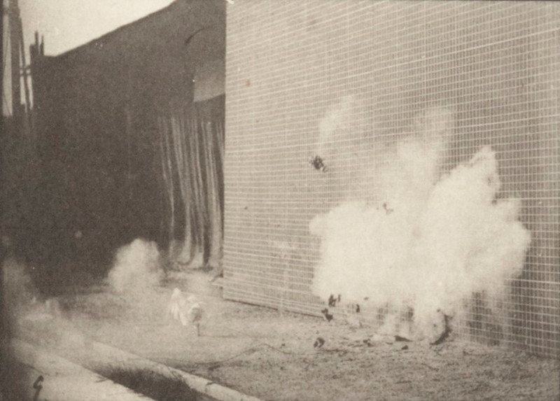 Chickens scared by a torpedo
