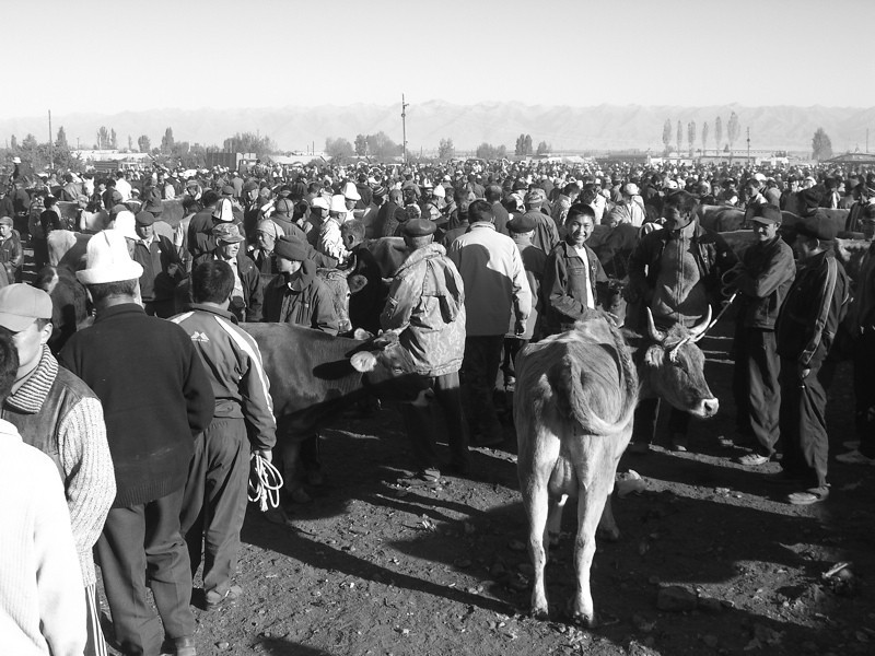 Karakol Sunday Animal Market - Kyrgyzstan