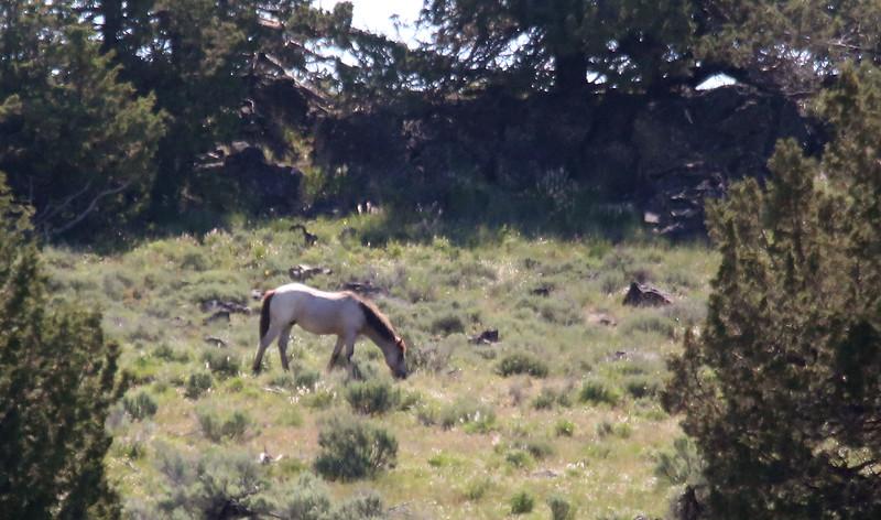 Burns Oregon  Ranch and BLM Horses