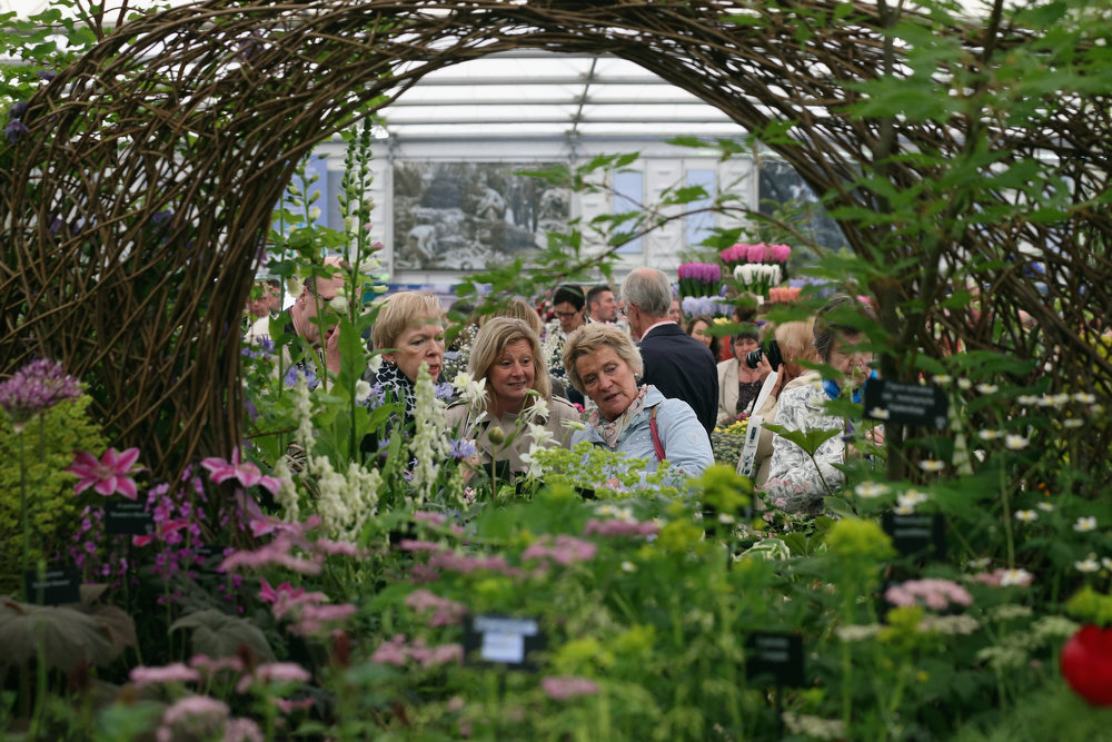 . Visitors admire the flora on the Hardy Plant Society stand in The Great Pavilion at the RHS Chelsea Flower Show on May 21, 2013 in London, England. The Chelsea Flower Show run by the RHS celebrates its 100th birthday this year.  (Photo by Oli Scarff/Getty Images)