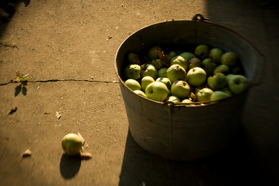 Apples (and a couple of sunflowers) using the Lensbaby lens
