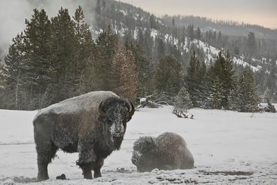 Wildlife Photo of the Day 2015