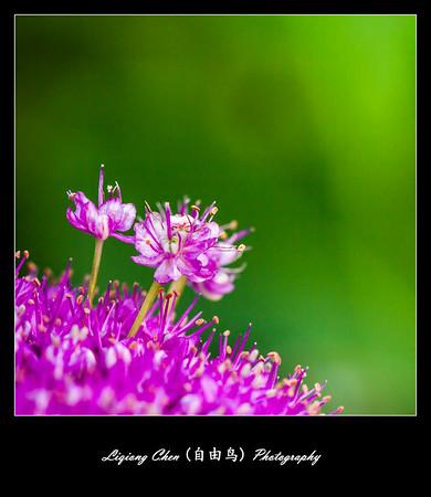 Unknown-flower 37