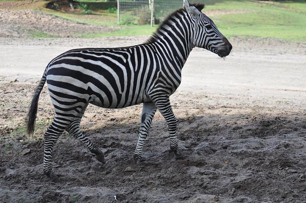 Safaripark De Beekse Bergen te Hilvarenbeek