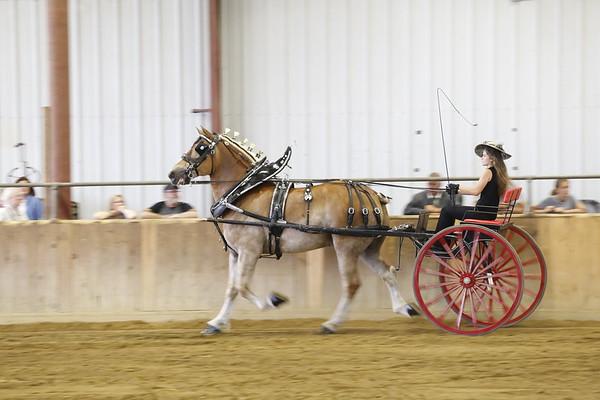 Draft Horses 2018