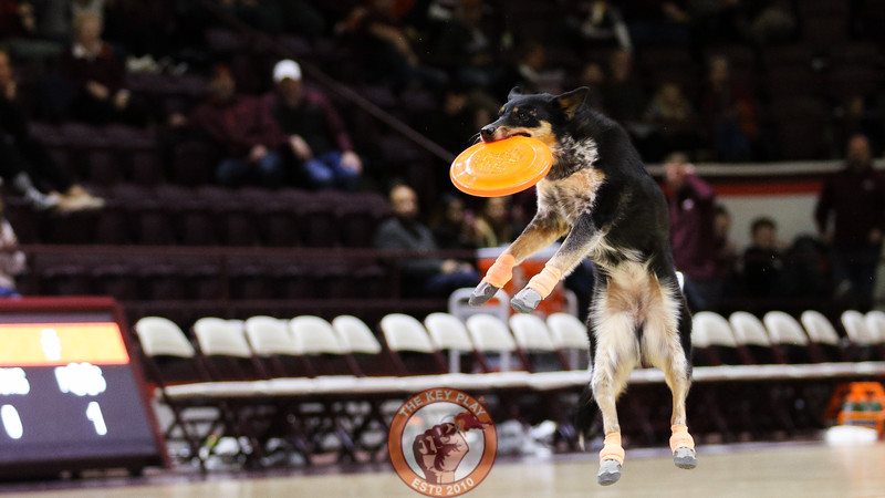 "A dog in the ""Mutts Gone Nuts"" act catches a frisbee during the halftime show. (Mark Umansky/TheKeyPlay.com)"