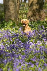 Bluebell Photo Shoot Sunday 6th May Thrift Wood