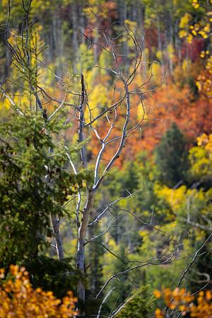 2021 Fall Colors Utah