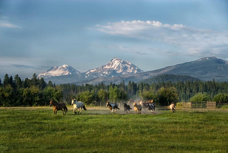 Horses-at-the-Gate_BBR_KateThomasKeown_DSC7045 copy.jpg