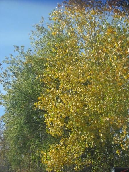 Fall pics 2008 029.jpg