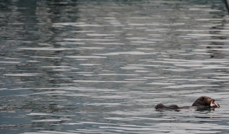 Kenai-Fjords-195.jpg