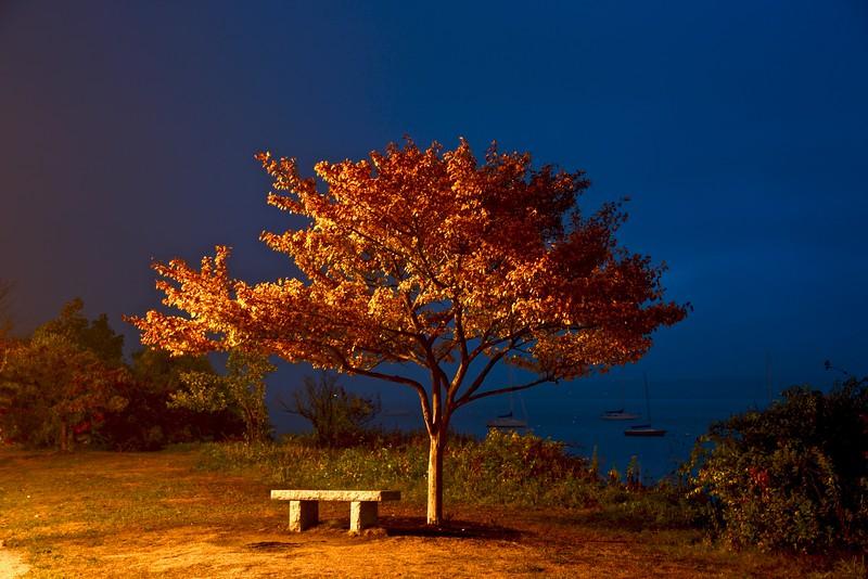 Toms tree 9:28:20.jpg