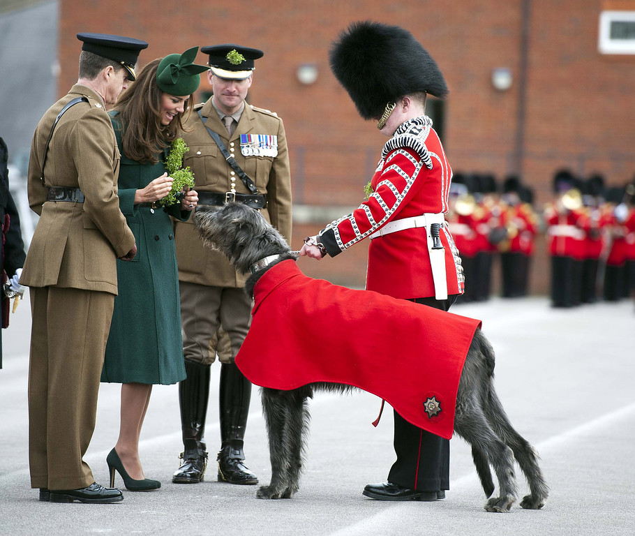 . Catherine, Duchess of Cambridge presents a \'Shamrock\' to Regimental Mascot Domhnall during the St Patrick\'s Day parade at Mons Barracks on March 17, 2014 in Aldershot, England. Catherine, Duchess of Cambridge and Prince William, Duke of Cambridge visited the 1st Battalion Irish Guards to present the traditional sprigs of Shamrocks to the Officers and Guardsmen of the Regiment.  (Photo by Bradley Page - WPA Pool/Getty Images)