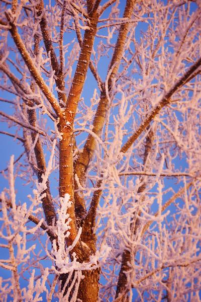 iowa_tree.jpg