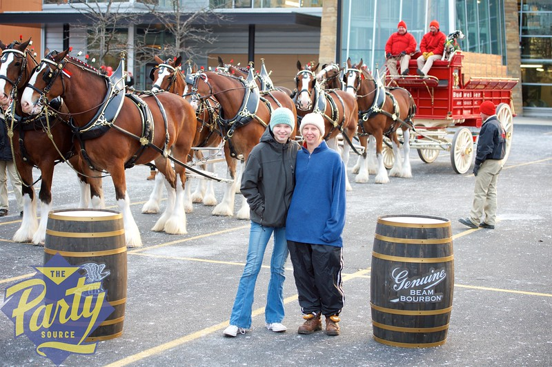 Clydesdale Portraits 95.jpg