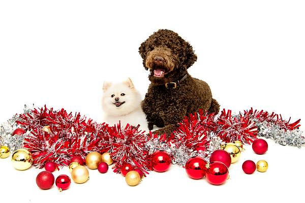 Boone & Chloe Christmas