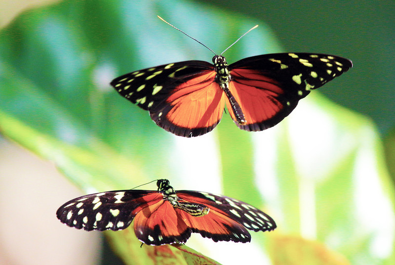 .. another look at our two black/orange butterflies