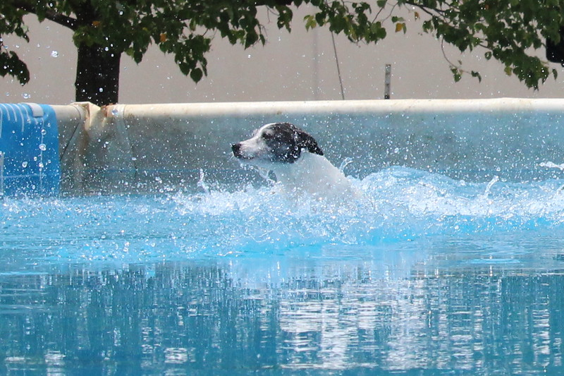 2015.8.6 Winnebago County Fair Dock Dogs (28).JPG