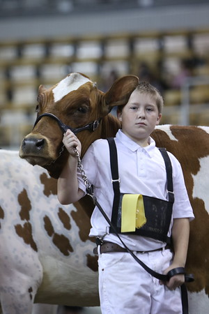 4-H Dairy Cattle