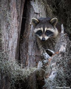 2012 - Wildlife