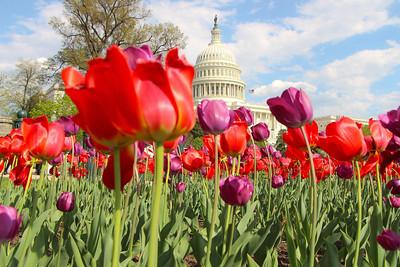 DC Spring 2014