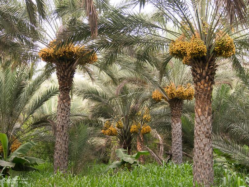 palm tree (6).jpg