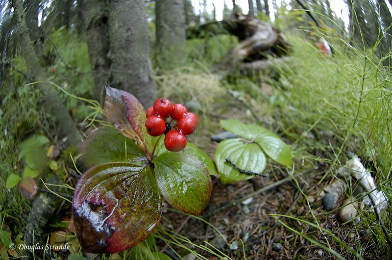 0508291101_WildCranberries.jpg