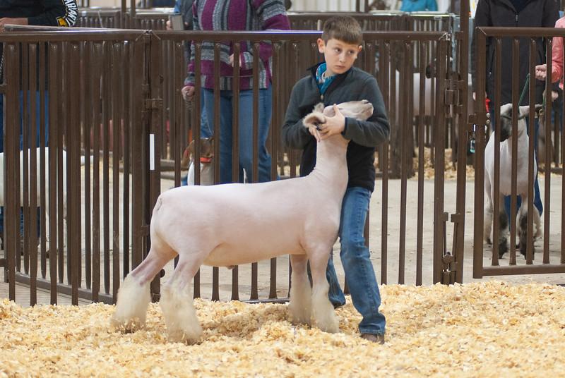 kay_county_showdown_sheep_20191207-33.jpg