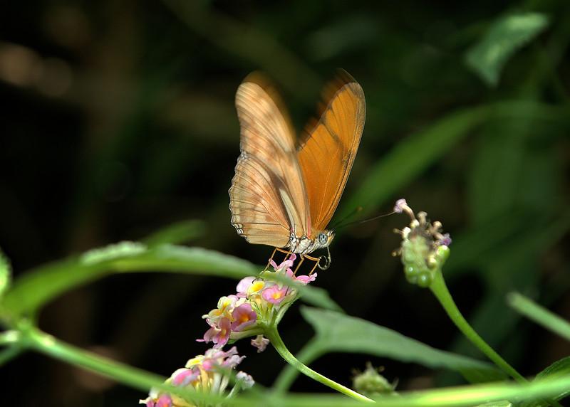 Fluttering .jpg