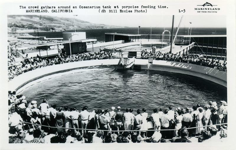 Porpoise Feeding Time