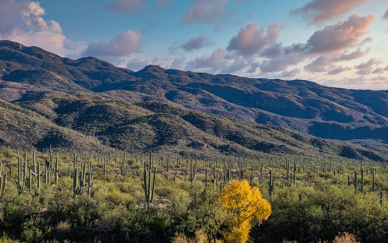 Tanque Verde Ranch - Tucson, AZ - 2020