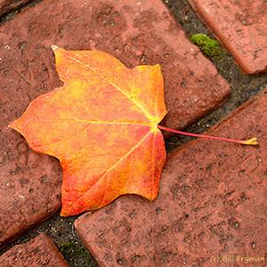 Autumn Colors 2012
