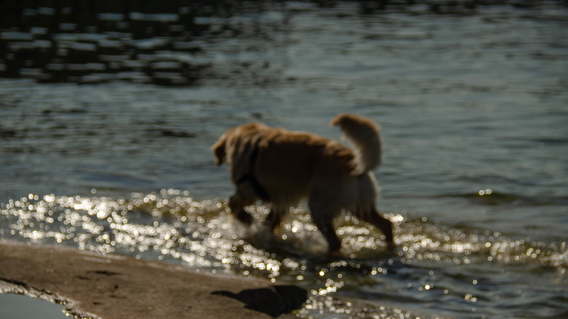 PuppyParty18-663.jpg
