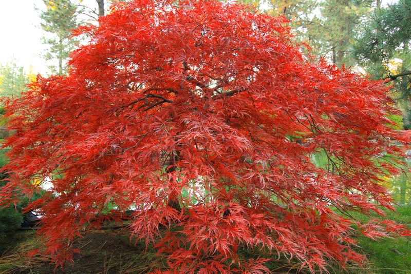 fall-0109-2.jpg