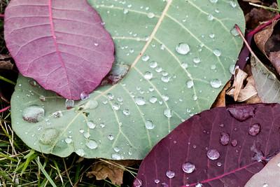 2020 10 28: Neighborhood Walk, Leaves-Water Drops