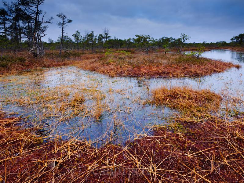 Ezers Cenas tīrelī vēlā rudens rītausmā /A lake in Cenas bog in am Autumn morning