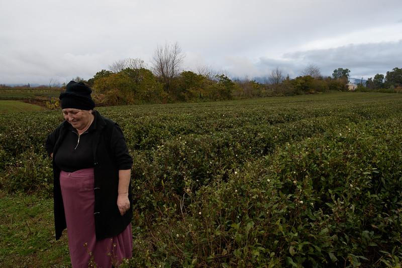 The last surviving tea plantation