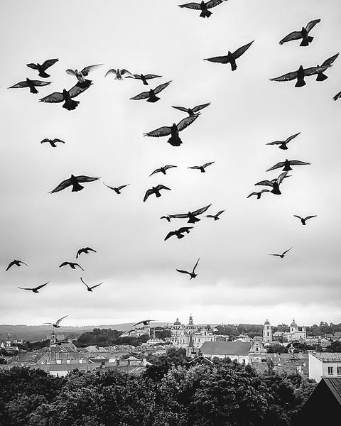 Nijole Shuberg Photography-9.jpg